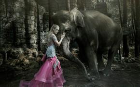 Обои девушка, слон, ситуация
