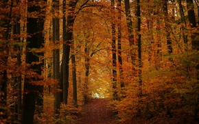 Картинка осень, лес, дорожка, ноябрь