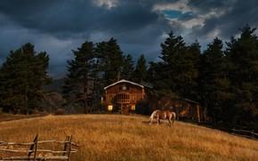 Картинка деревья, пейзаж, тучи, природа, дом, конь, луг, Грузия, Тушетия