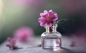 Картинка цветок, стекло, листья, вода, свет, зеленый, стол, фон, розовый, один, лепестки, маленькая, стеклянная, боке, размытый, …