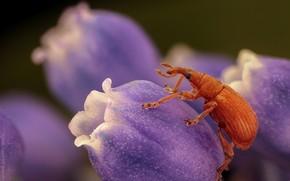 Картинка макро, цветы, жук, весна