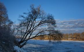 Картинка река, дерево, рассвет, берег, весна