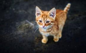 Картинка кошка, асфальт, темный фон, котенок, улица, малыш, рыжий, котёнок