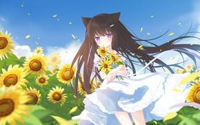 Картинка поле, лето, небо, подсолнухи, лепестки, девочка