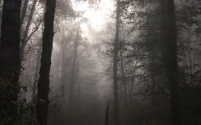 Картинка лес, деревья, природа, туман, сумрак