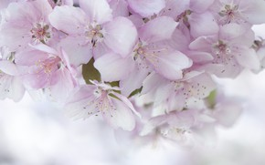 Картинка розовый, нежность, весна
