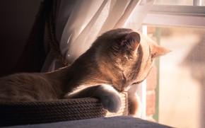 Картинка кошка, кот, свет, отдых, окно, рыжий, персиковый, когтеточка