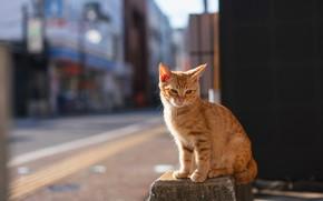 Картинка дорога, кошка, кот, свет, город, поза, котенок, стена, улица, здания, рыжий, котёнок, тротуар, сидит, боке, …