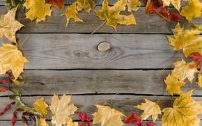 Картинка осень, листья, фон, colorful, клен, wood, background, autumn, leaves, осенние, maple