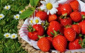 Картинка зелень, лето, цветы, ягоды, поляна, ромашки, полотенце, урожай, клубника, красные, белые, корзинка, много, композиция, виктория, …