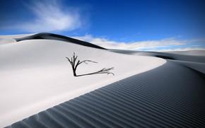 Картинка дерево, пустыня, тень