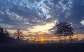 Картинка поле, закат, камыш