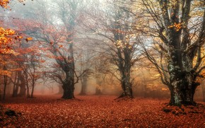 Картинка лес, листья, ветки, туман, парк, листва, листопад