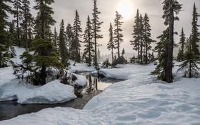 Картинка зима, лес, солнце, снег, деревья, природа, речка