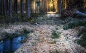 Картинка иней, лес, природа