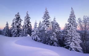 Картинка зима, снег, деревья, Швейцария, ели, сугробы