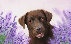 Картинка цветы, фон, друг, собака