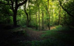 Картинка лес, деревья, весна