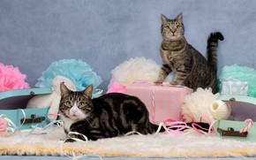 Картинка кошка, кот, кошки, цветы, ленты, праздник, пара, подарки, мех, парочка, дуэт, два, коробки, позы, два …