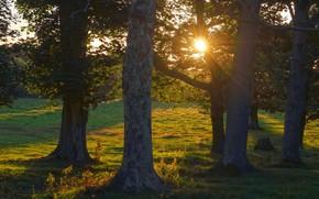 Картинка лес, солнце, свет, деревья, закат, ветки, природа, парк, поляна, листва