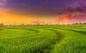 Картинка поле, закат, зарево