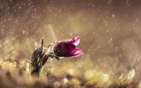 Картинка цветок, капли, свет, блики, дождь, весна, сон трава