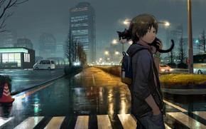 Картинка дорога, кот, город, после дождя, парень