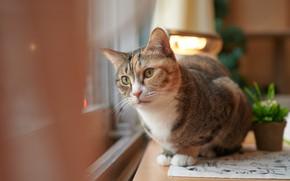 Картинка кот, поза, зеленые глаза