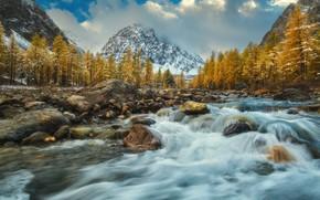Картинка осень, облака, деревья, пейзаж, горы, природа, река, камни, поток, Алтай, Сибирь, Оборотов Алексей