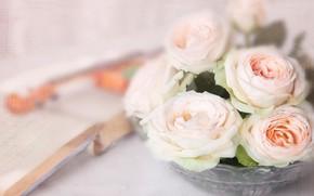 Картинка скрипка, розы, букет