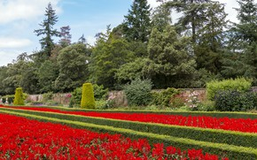 Картинка цветы, Англия, сад, Cliveden Garden