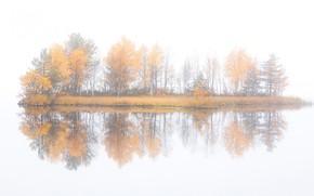 Картинка осень, деревья, туман, остров