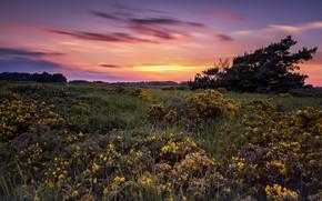 Обои закат, цветы, луг, Pascal Lechaudel у