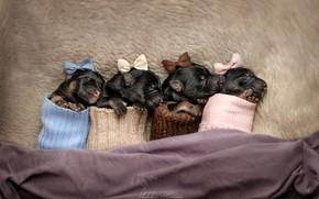 Картинка щенки, носки, бантики, крошки