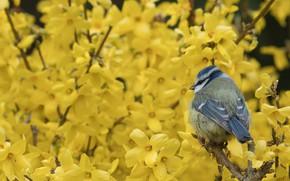 Картинка цветы, птица, синица