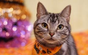 Картинка кошка, кот, взгляд, серый, фон, портрет, полосатый, платок, хеллоуин, боке