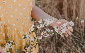 Картинка девушка, ветка, весна, цветение