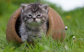 Картинка трава, малыш, мордочка, котёнок
