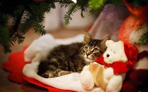 Картинка кошка, котенок, игрушка, мишка, Новый год, котёнок, тедди