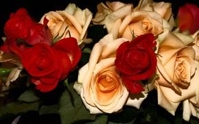 Картинка цветы, темный фон, розы, букет, красные, много, кремовые