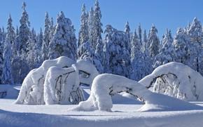 Картинка зима, лес, снег, ветви, ель, сугробы