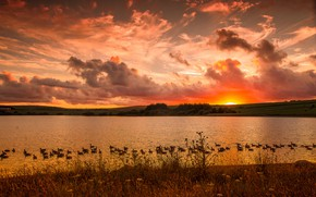Картинка пейзаж, закат, озеро, утки
