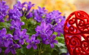 Картинка Колокольчики, Цветочки, Flowers, Фиолетовые цветы, Purple flowers