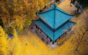 Картинка осень, Китай, храм, пагода, Нанкин, провинция Цзянсу