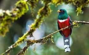 Картинка птица, ветка, экзотика, яркая