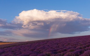 Картинка лето, небо, облака, цветы, голубое, радуга, облако, после дождя, лаванда, тучка, плантация, лавандовое поле