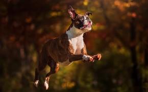 Картинка друг, прыжок, собака