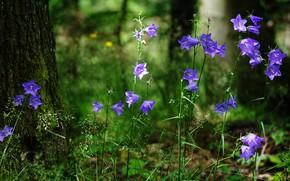 Картинка зелень, лес, лето, трава, свет, цветы, дерево, стебли, поляна, весна, ствол, цветочки, колокольчики, сиреневые, боке, …