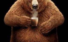 Картинка смешная реклама, Funny Advertising, любителям мёда, Coffee-Mate: Honey Lovers Rejoice, Coffee-Mate, сухие сливки, Nestle