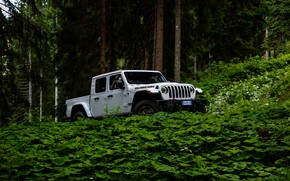 Картинка белый, внедорожник, пикап, Gladiator, 4x4, Jeep, Rubicon, в лесу, 2019